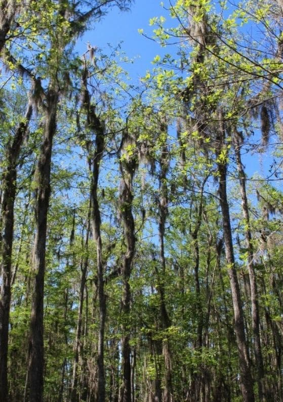 New Orleans Swamp Tour with Cajun Encounters
