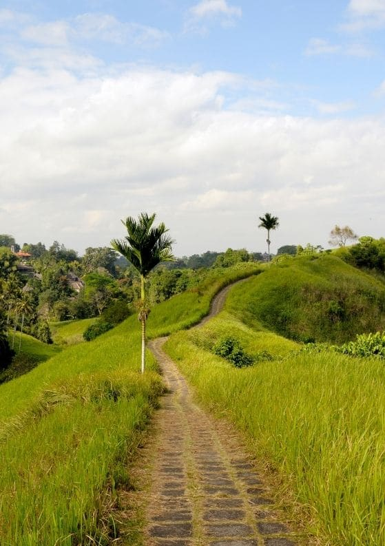 Where to Stay in Ubud: The Maya Ubud