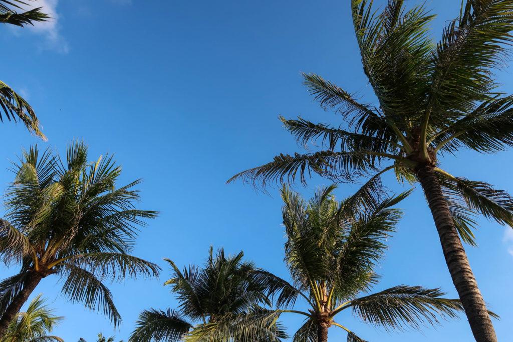 palm trees in seminyak bali