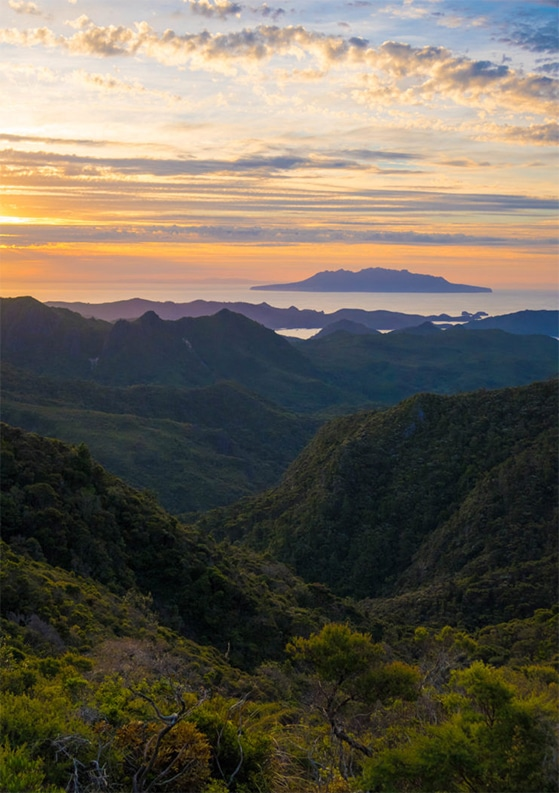 10 Photos to Convince You to Visit Great Barrier Island