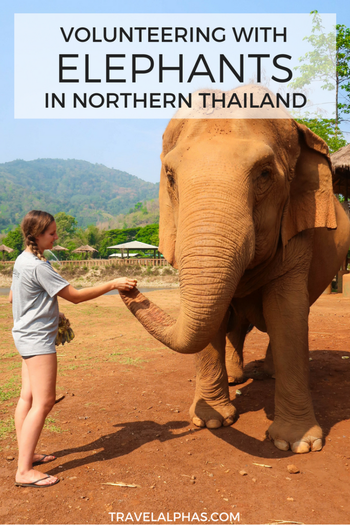 Thinking about volunteering for one week at the Elephant Nature Park in Chiang Mai, Thailand? That's what we did! This post details what it's like to volunteer at an elephant sanctuary in Thailand and includes lots of photos! Elephant Sanctuary | Thailand | Travel | Ride Elephant (this post explains why you shouldn't) | Chiang Mai | What to Do in Chiang Mai | Northern Thailand | Thailand Honeymoon | Thailand Itinerary
