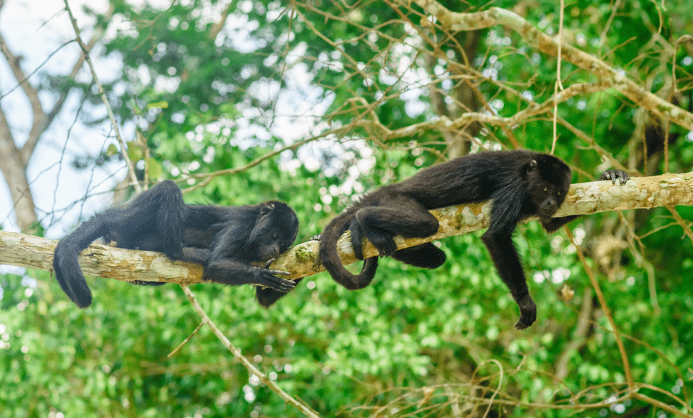monkeys in tikal