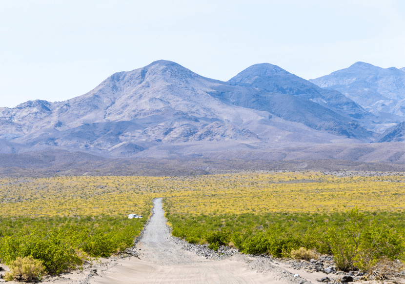 death valley desert covered in yellow flowers, the super bloom. a must on your california bucket list.