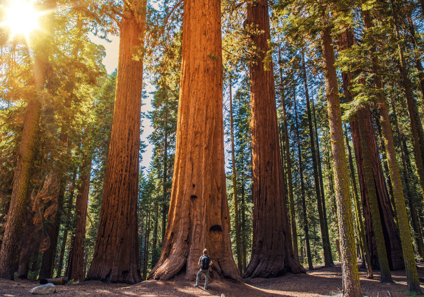 Sequoia National Park is super impressive and a must on your California bucket list!
